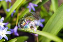 Three perfect soap bubbles balances delicately to a purple flowe Stock Image