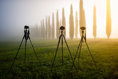 Three photo tripods with cameras, standing in the meadow. Moody misty landscape in the background Royalty Free Stock Image