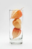 Three physalis in the glass Royalty Free Stock Photos