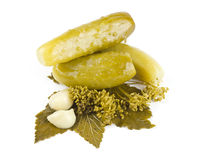 Three pickles Stock Images
