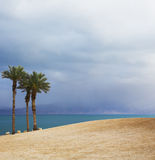 Three picturesque palm trees on the Dead Sea Royalty Free Stock Photo