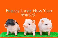 Pig boar in red background, Happy Lunar New Year greeting text. stock images