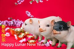 Three pig boar in red background with Happy Lunar New Year greeting text. royalty free stock photography