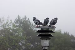 Three pigeons are sitting on the lantern and looking away. Three pigeons are sitting on the lantern Stock Photos
