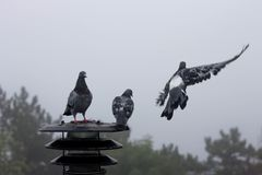 Three pigeons are sitting on the lantern and looking away. Three pigeons are sitting on the lantern Stock Photography