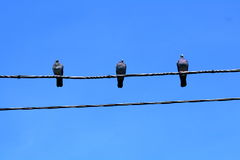 Three pigeons. On the wire Royalty Free Stock Photo