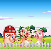Three pigs dancing inside the fence Stock Images