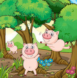 Three pigs playing in the forest Royalty Free Stock Image