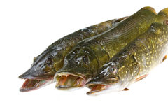Three pike on a white background Stock Photo