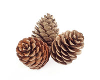 Three pine cone Royalty Free Stock Photos