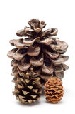 Three pine cones Stock Photography