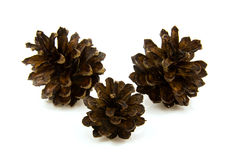 Three pine cones Stock Image