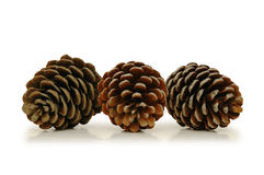 Free Three Pine Cones Stock Photos - 1414643