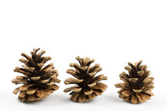 Three pine cones. Isolated on white background stock photography