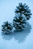 Three pine cones Royalty Free Stock Photo