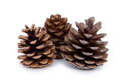 Three Pine cones Stock Photos