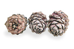 Three pine cones Royalty Free Stock Photography