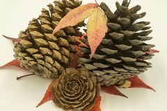 Three pine cones, stock photo
