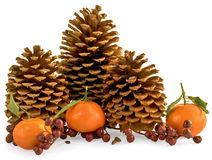 Three Pine Cones With Berries, Pinole and Oranges. Three Pine Cones With Red Berries, Pinole (Pine nuts) and Oranges Stock Photo