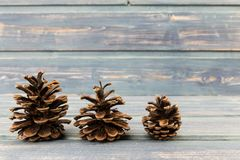 Three pine cones on a blue wooden background Stock Photos