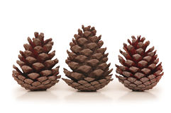 Three pine cones isolated Royalty Free Stock Photo
