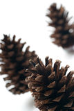 Three pine cones isolated Stock Photos