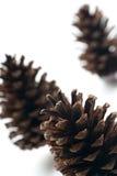 Three pine cones isolated stock photos