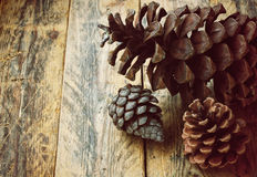 Three pine cones Royalty Free Stock Images