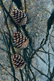 Three pine cones on a stone Stock Photo