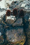 Three pine cones on a stone Stock Photography