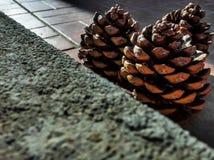 Three pine cones sunbathing Stock Photo