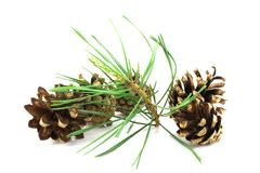 Three pine cones with twig Royalty Free Stock Photography