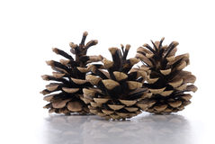 Three Pine Cones on White with Subtle Reflection Stock Photo