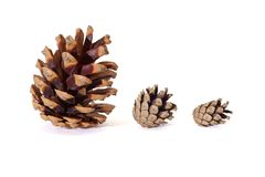 Three pine tree cones of various size isolated. On white background Royalty Free Stock Photos