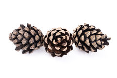 Three pine tree cones on white background Stock Photography