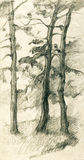 Three pine trees in the forest pencil sketch illustration Stock Photo
