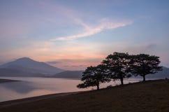 Three pine trees near the lake at dawn stock image