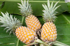 Three pineapple Stock Images