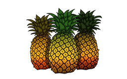 Three Pineapple illustration. Three Pineapple on white Background, illustration Royalty Free Stock Images