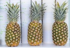 Three pineapple,  very cool presented Royalty Free Stock Image