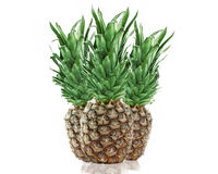 Three Pineapples Royalty Free Stock Image