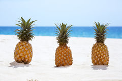 Three pineapples on white sandy beach background Royalty Free Stock Photos