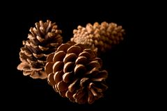 Three Pinecones on Black Stock Images