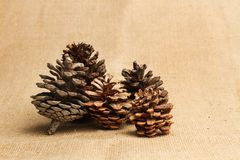 Three pinecones on a table stock photo