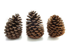 Three pines Royalty Free Stock Photo
