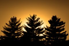 Three Pines and a Sunset. The sun setting behind three pine trees royalty free stock photography