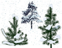 Three pines under snowfall  on white Royalty Free Stock Photography