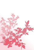 Three pink cherry tree branches Royalty Free Stock Images
