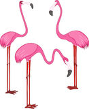 Three pink flamingos Stock Photo