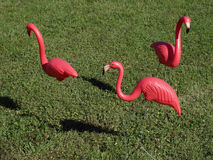 Three Pink Flamingos Stock Images